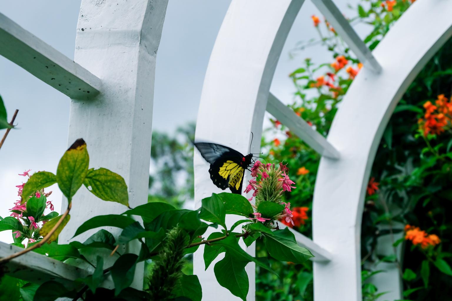 edited-terrazas-de-flores-botanical-garden-22