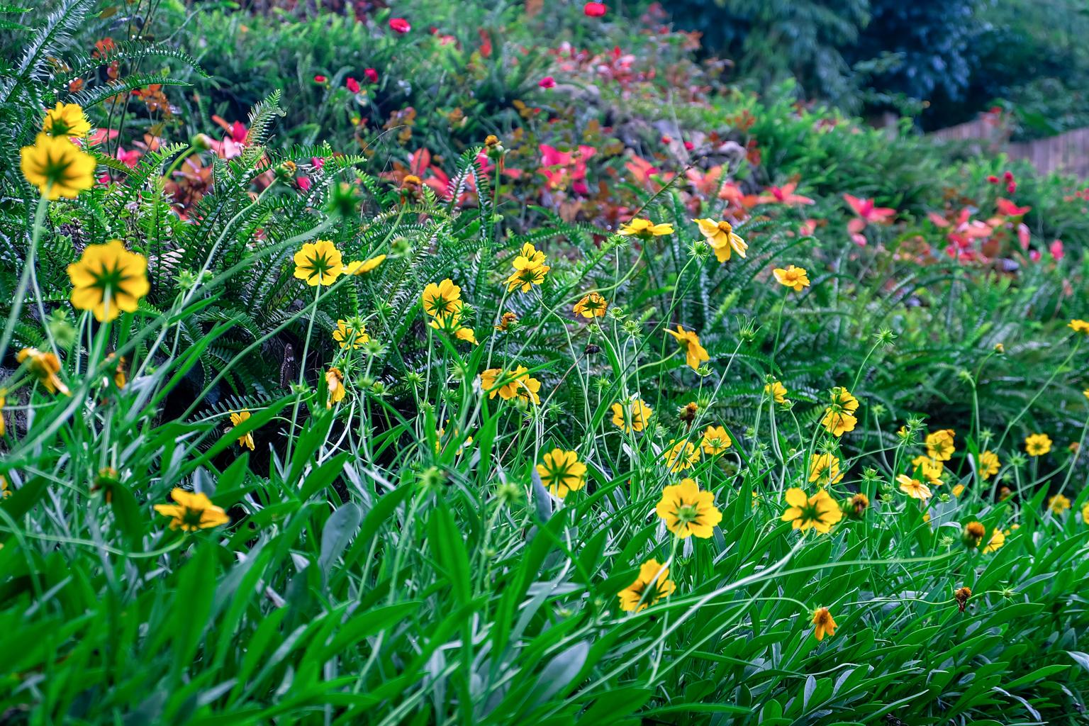 edited-terrazas-de-flores-botanical-garden-32